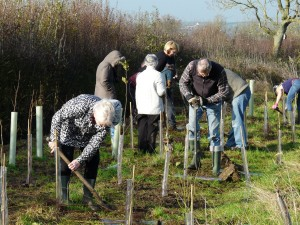 Tree planting at Sun Rising