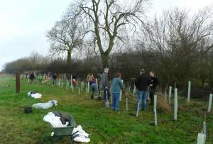 Volunteers tree planting at Sun Rising