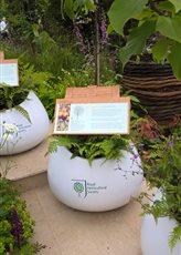 Bespoke Planters for Chelsea