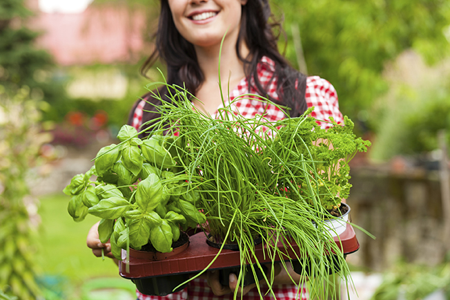 herbs-in-tray-woman-holding-Large[1]