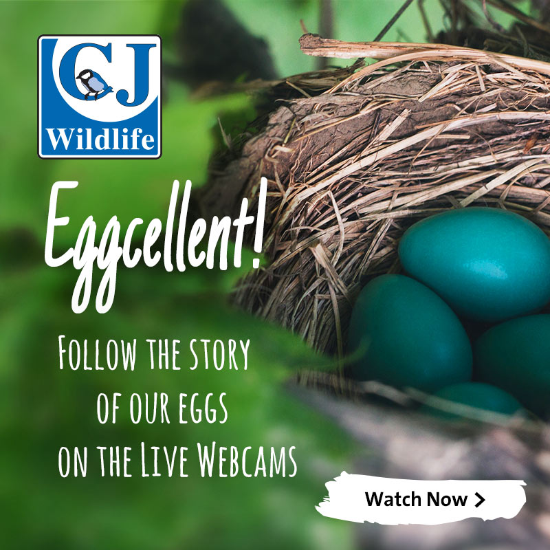 CJ Wildlife Webcams: Follow our nesting birds live!