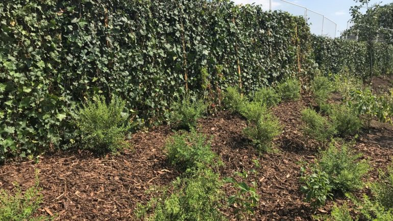 Green Screens installed on new housing estate provides instant impact